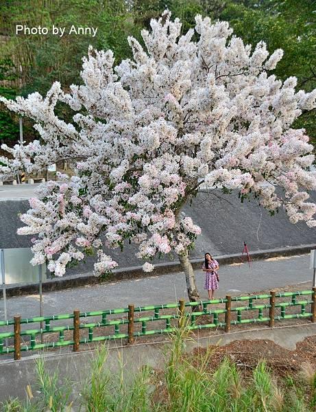 竹崎公園77.jpg