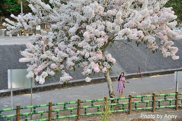 竹崎公園78.jpg