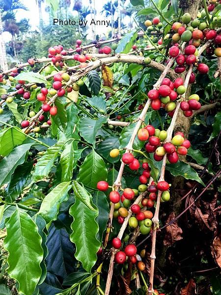 鹿蒿咖啡27.jpg