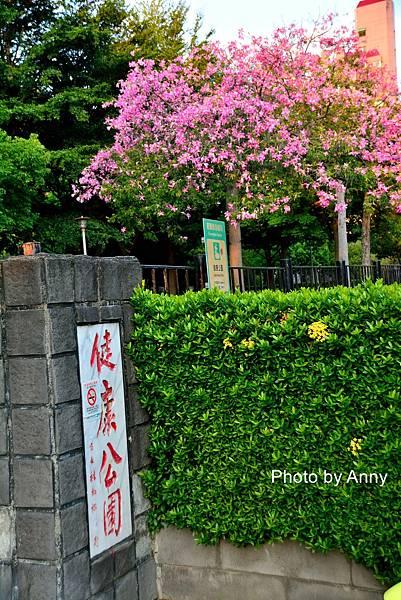 美人樹12.jpg