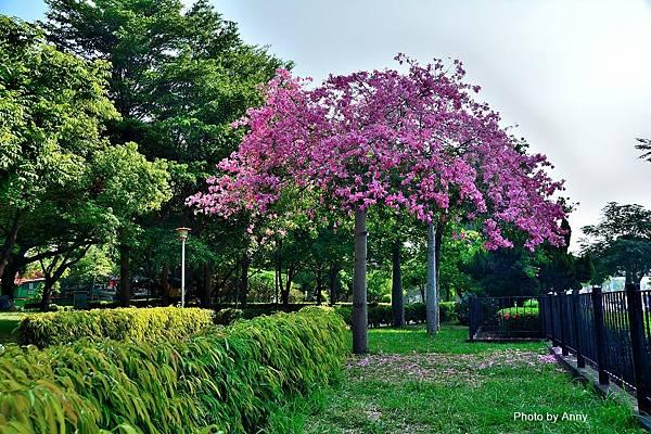 健康公園27.jpg