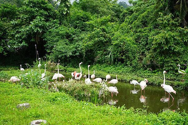 臺北市立動物園 226.jpg