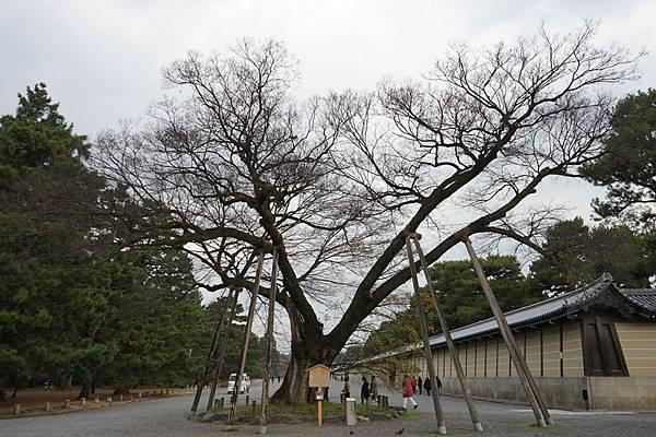 704 京都御所 01.jpg