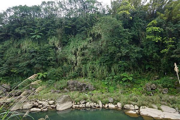 十分瀑布公園 13.jpg