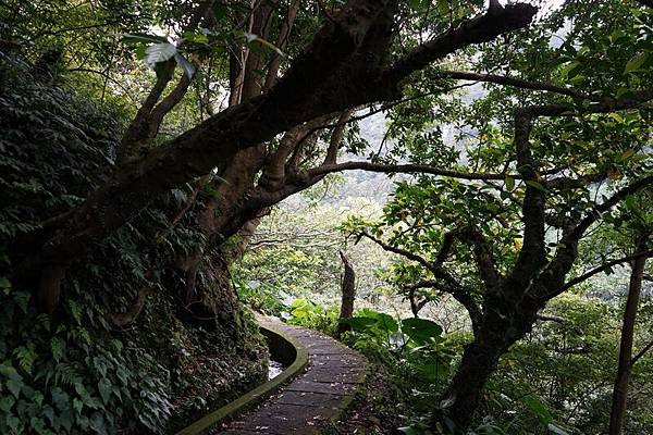 青山瀑布 16.jpg