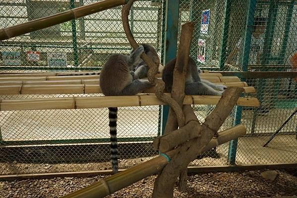 D06 東北野生動物園 34.jpg