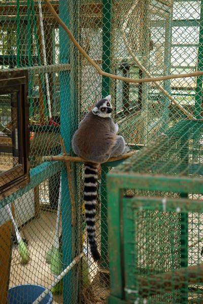D06 東北野生動物園 36.jpg