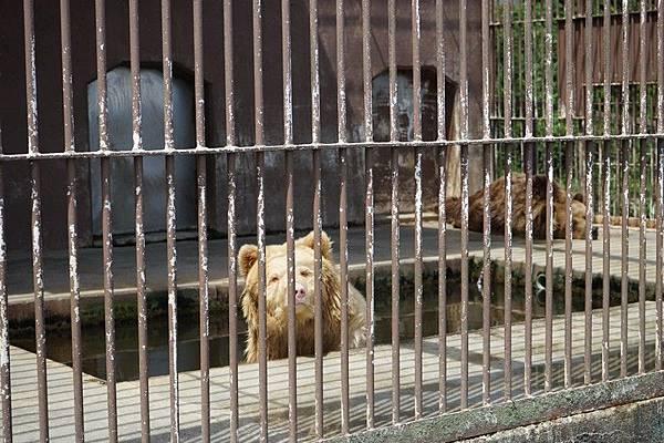 D06 東北野生動物園 59.jpg