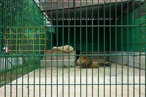 D06 東北野生動物園 106.jpg