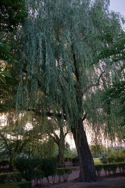 E12 荒池公園 21.jpg