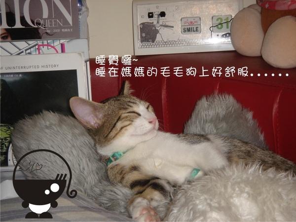 喵兒子睡覺前的新症狀
