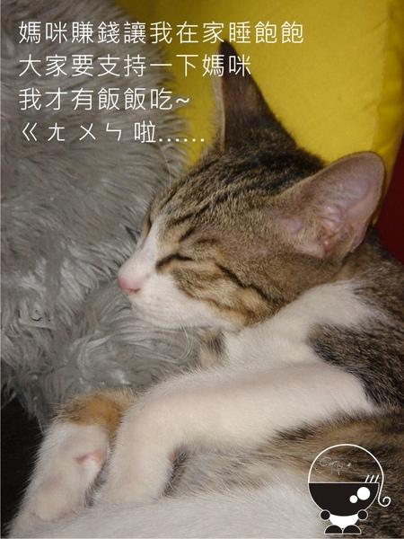 貓兒子.jpg