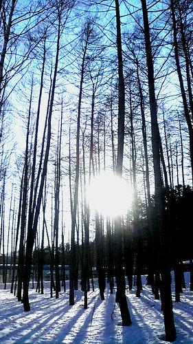 北海道的樹影.jpg