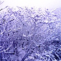 雪枝.jpg