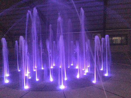 紫水柱1.jpg