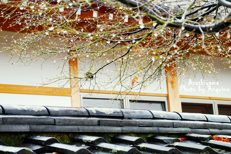 廖西瓜@日本京奈自由行嵐山渡月橋清涼寺嵐電紅葉13