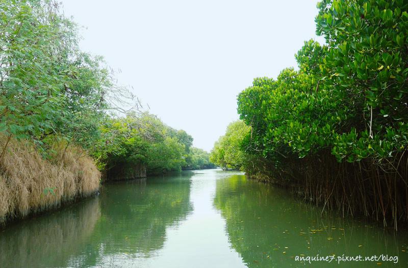 廖西瓜@台南安南區四草紅樹林綠色隧道台版亞馬遜8