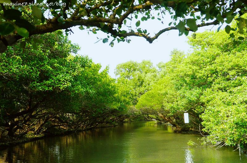 廖西瓜@台南安南區四草紅樹林綠色隧道台版亞馬遜15