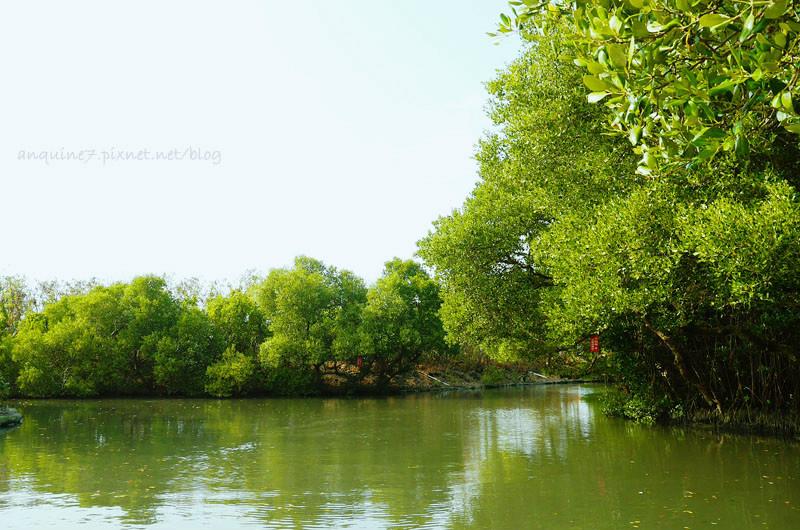 廖西瓜@台南安南區四草紅樹林綠色隧道台版亞馬遜11