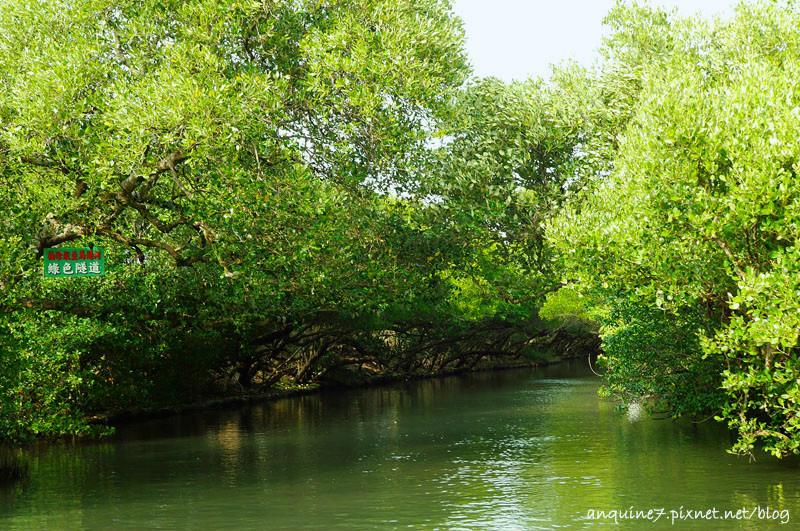 廖西瓜@台南安南區四草紅樹林綠色隧道台版亞馬遜13