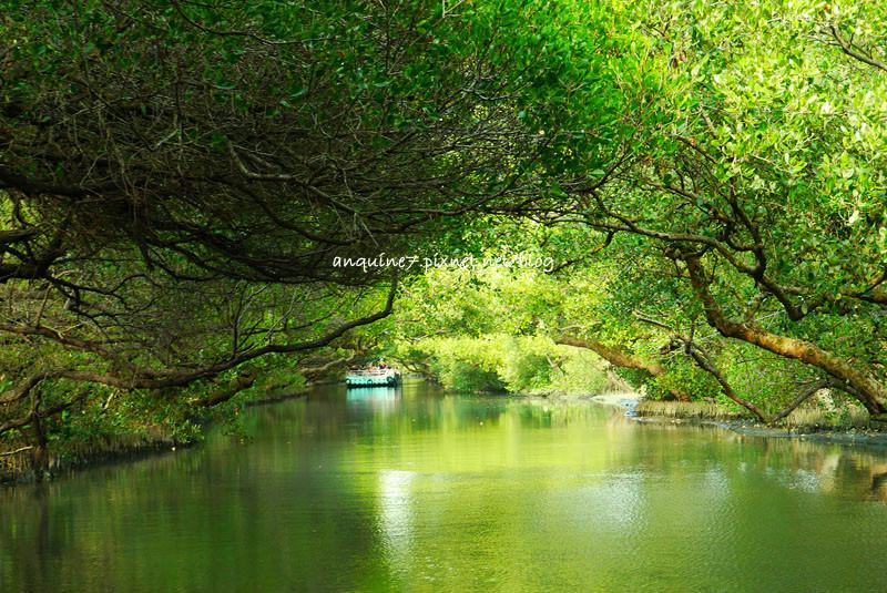 廖西瓜@台南安南區四草紅樹林綠色隧道台版亞馬遜20