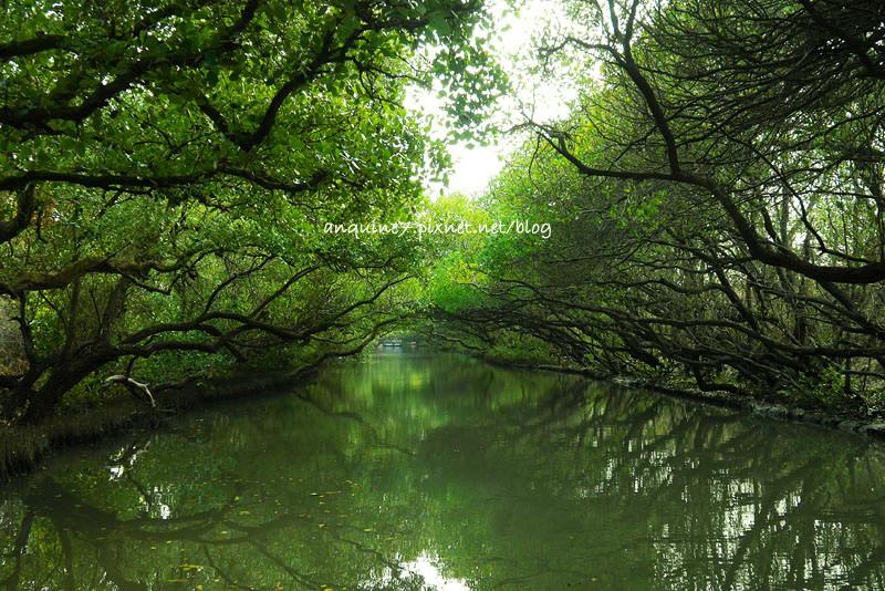 廖西瓜@台南安南區四草紅樹林綠色隧道台版亞馬遜26