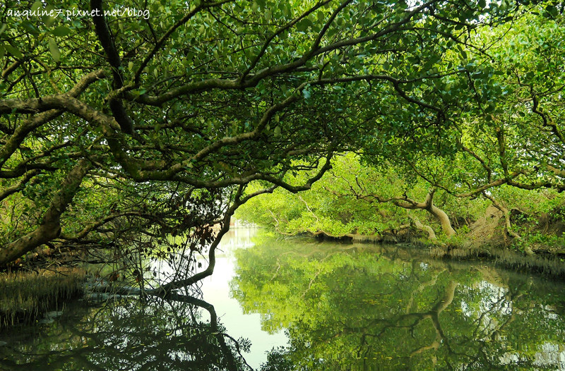 廖西瓜@台南安南區四草紅樹林綠色隧道台版亞馬遜23