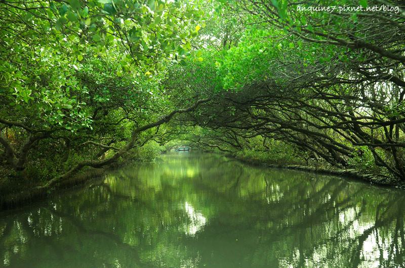 廖西瓜@台南安南區四草紅樹林綠色隧道台版亞馬遜27