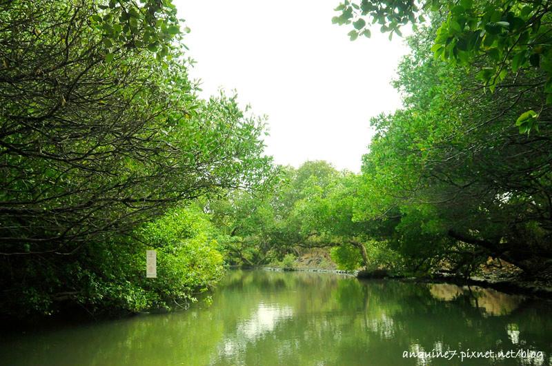 廖西瓜@台南安南區四草紅樹林綠色隧道台版亞馬遜30