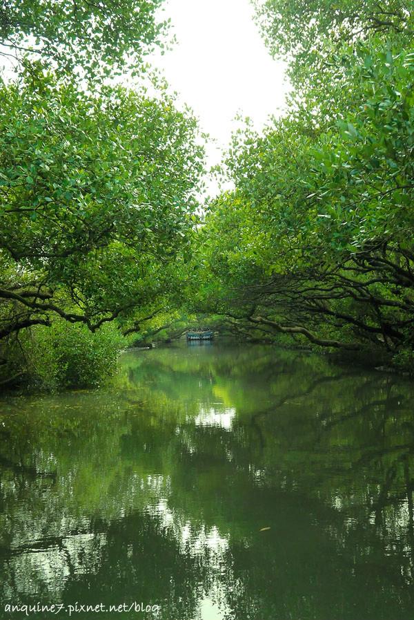 廖西瓜@台南安南區四草紅樹林綠色隧道台版亞馬遜28