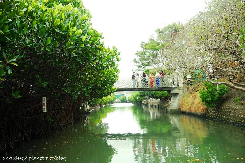 廖西瓜@台南安南區四草紅樹林綠色隧道台版亞馬遜32