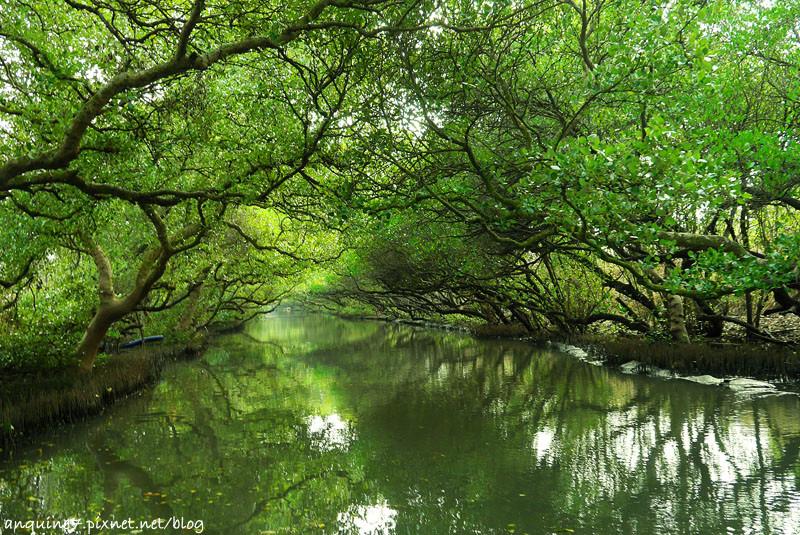 廖西瓜@台南安南區四草紅樹林綠色隧道台版亞馬遜25