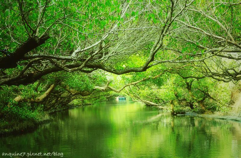 廖西瓜@台南安南區四草紅樹林綠色隧道台版亞馬遜36
