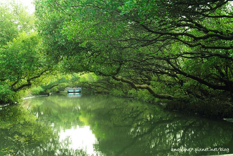 廖西瓜@台南安南區四草紅樹林綠色隧道台版亞馬遜28-1