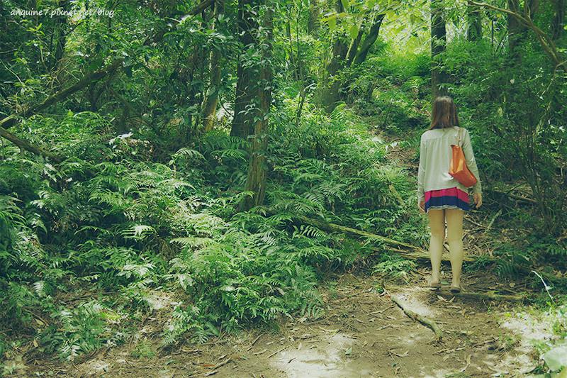 廖西瓜@陽明山竹子湖黑森林3