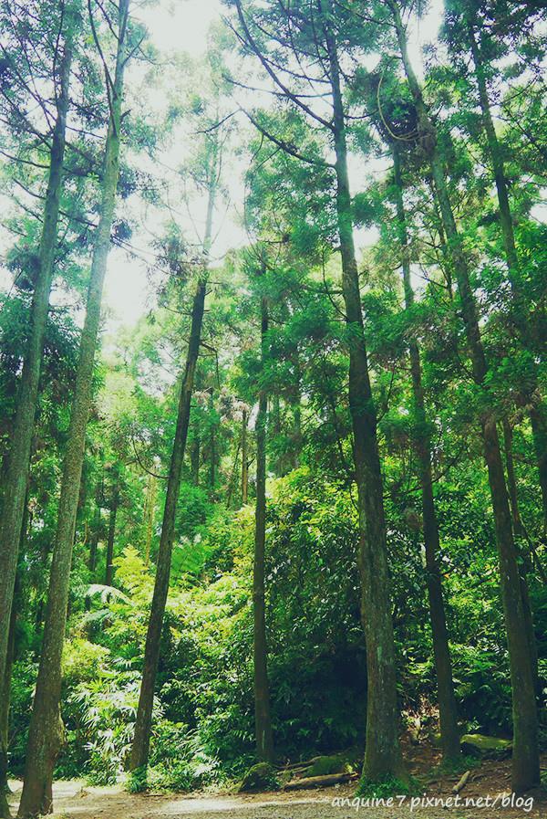 廖西瓜@陽明山竹子湖黑森林2