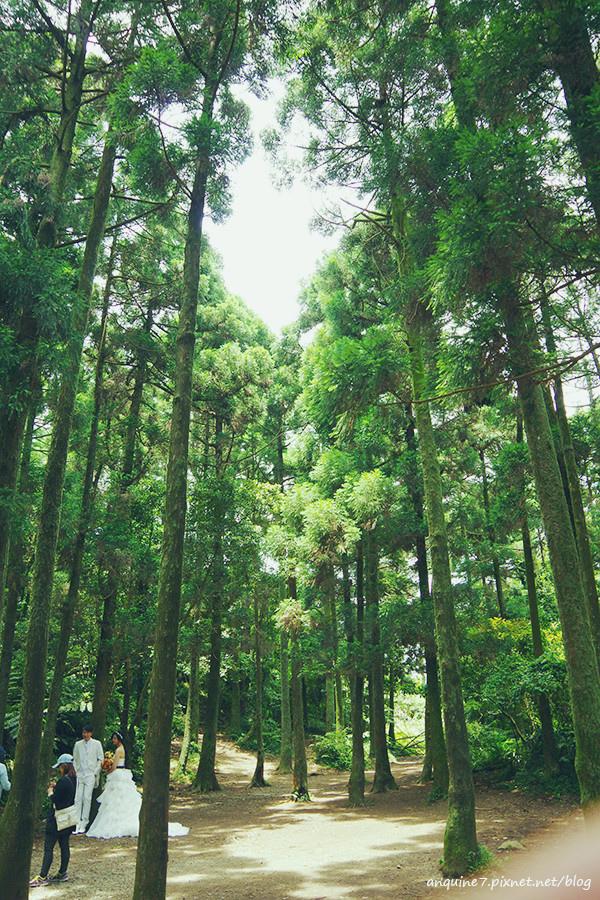 廖西瓜@陽明山竹子湖黑森林12