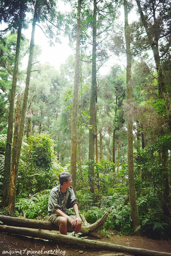 廖西瓜@陽明山竹子湖黑森林10