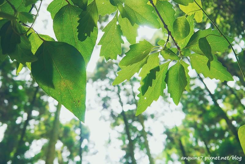 廖西瓜@陽明山竹子湖黑森林7