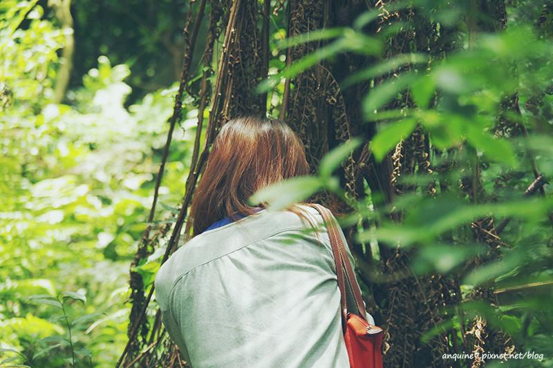 廖西瓜@陽明山竹子湖黑森林5