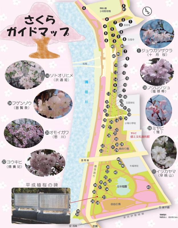 隅田公園櫻花.jpg