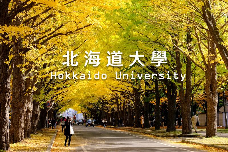 北海道大學銀杏攻略