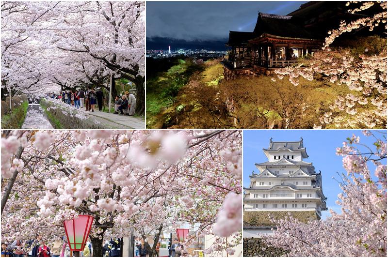 日本關西櫻花景點