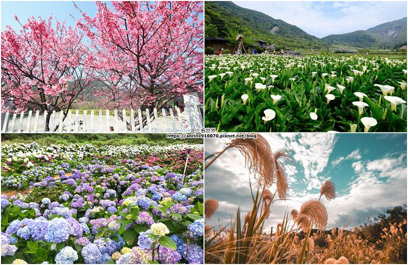陽明山花季.jpg