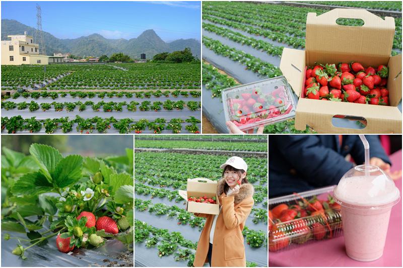 大湖草莓園2021.jpg