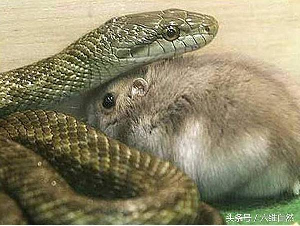 蛇鼠一窩.jpg