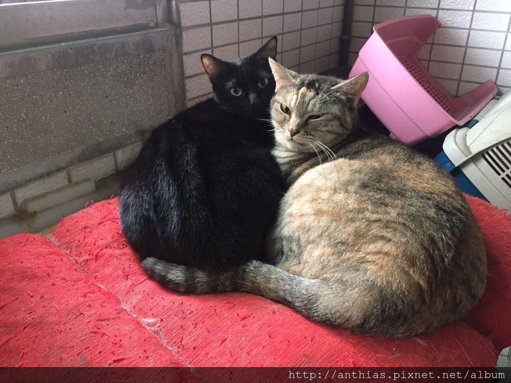 三貓_180303_0003.jpg