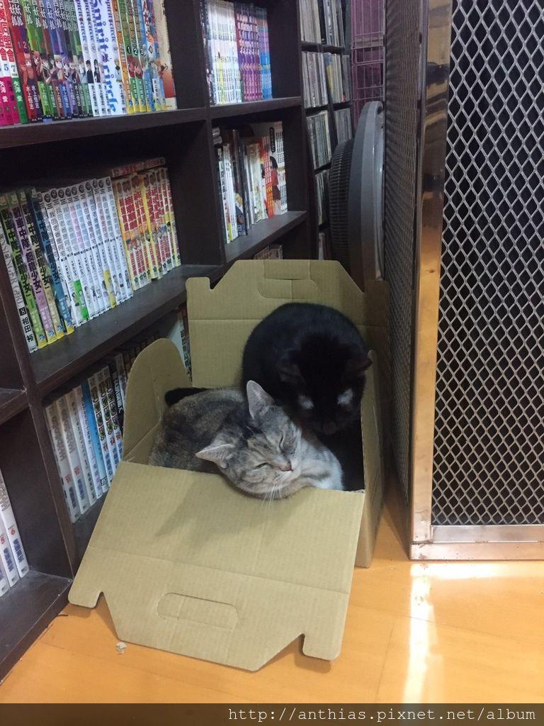 三貓_180303_0002.jpg