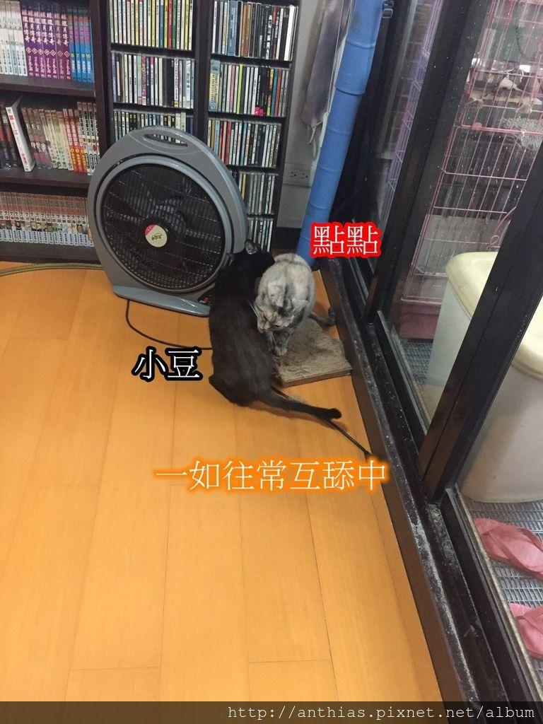 三貓_180303_0024.jpg