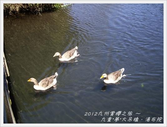 yume_yufuin11
